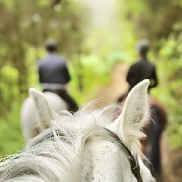 Forest Bathing on a Horse back